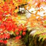 【画像】夏よりも秋の方が汗のニオイがきついって本当?