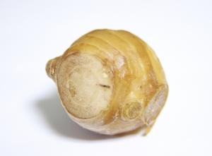 ashinioishouga