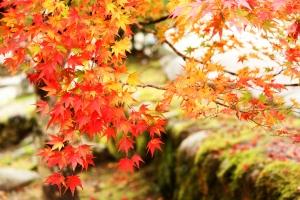 夏よりも秋の方が汗のニオイがきついって本当?